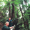10 Year Anniversary of the Discovery of the Wollemi Pine
